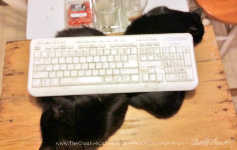 two black kittens with keyboard