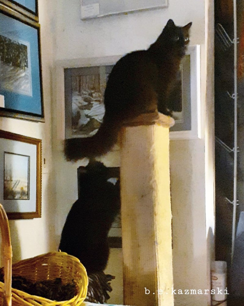two black cats on cat scratcher