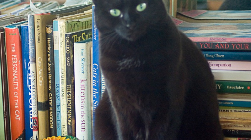 Bella in the cat book library.