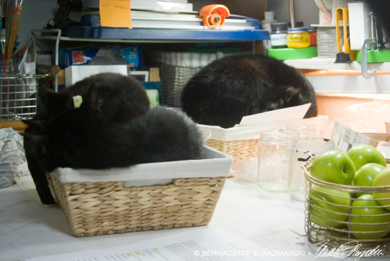 black cats in baskets
