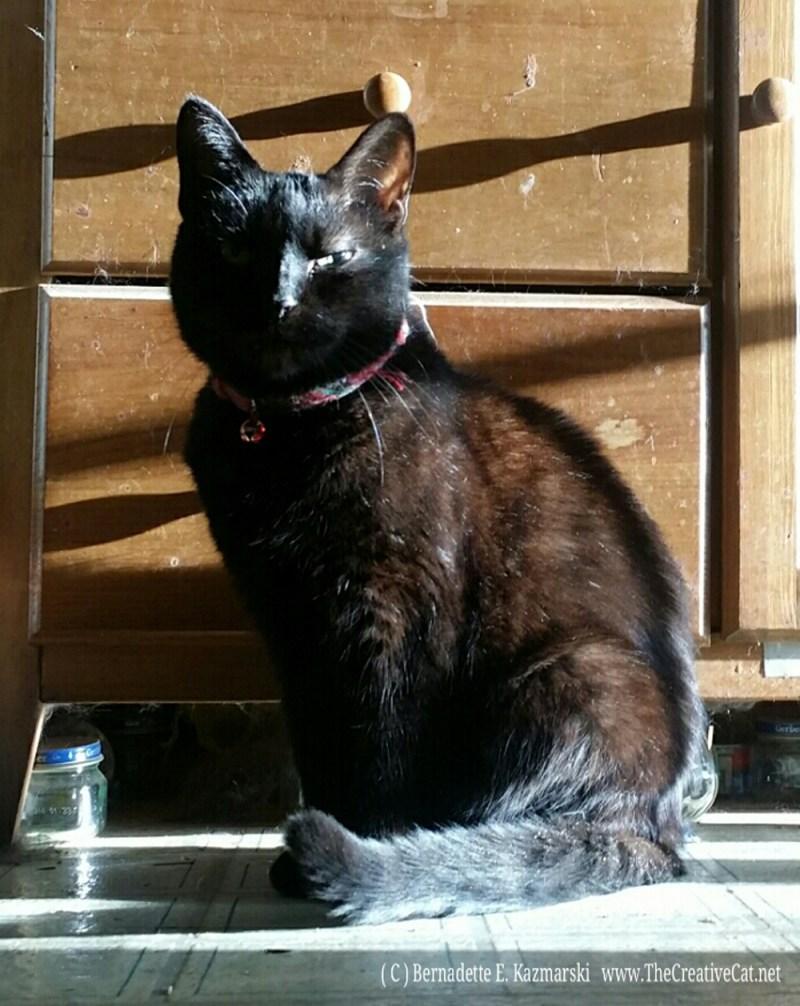 Mimi enjoys a sunbath.