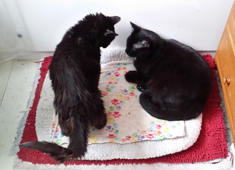 two black cats on cat bed