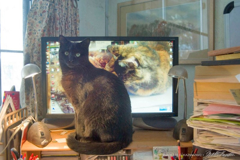 black cat watching black cat video