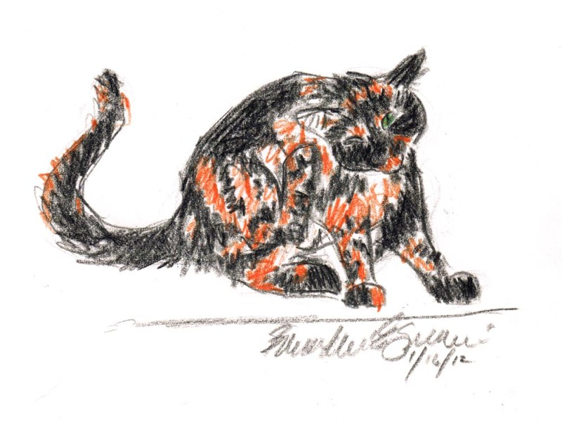 colored pencil sketch of cat scratching