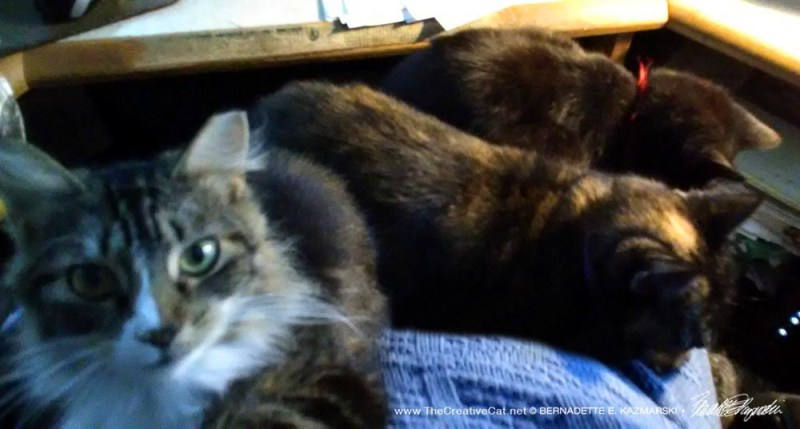 Taken over by three girl cats who want my lap.