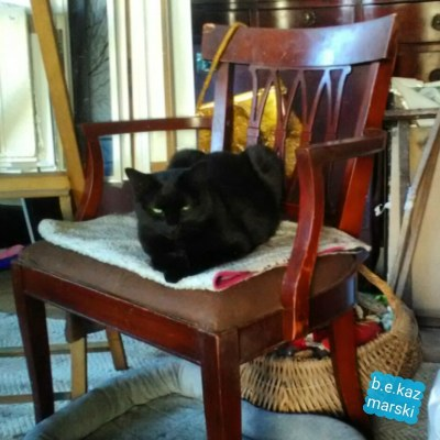 black cat on chair