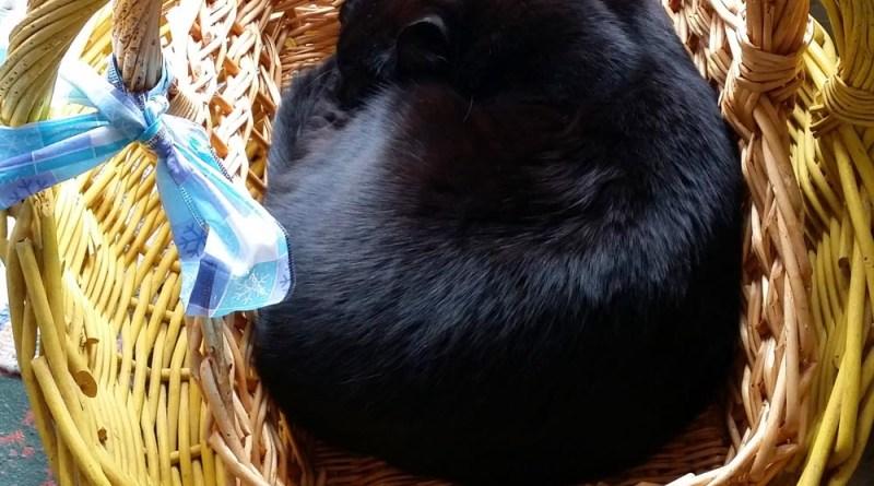 A basket in a basket!