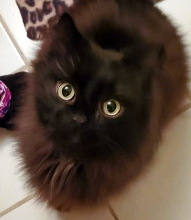 Cats for Adoption: Poe