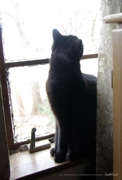 black cat looking upward