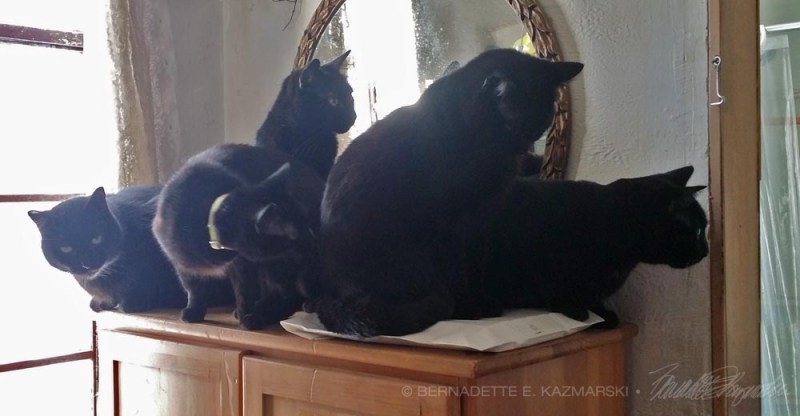 five black cats looking in doorway