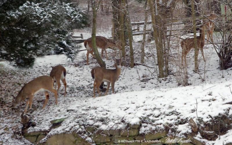 Six deer at dusk.