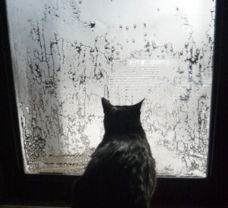 black cat at frosted door