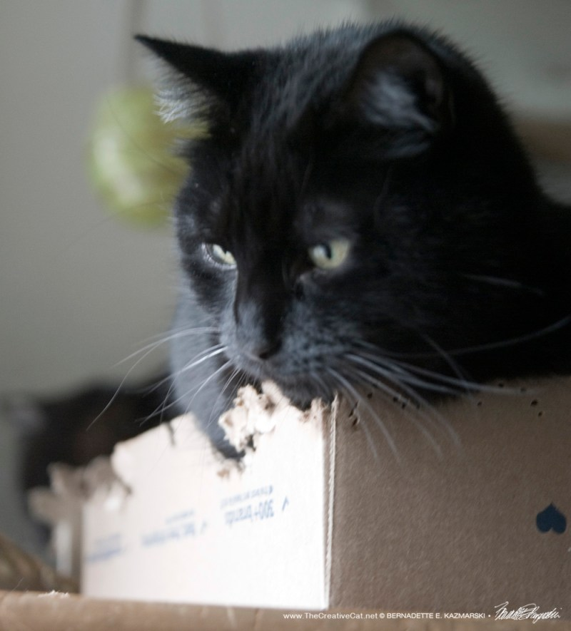 Mewsette listens to what the box is saying/