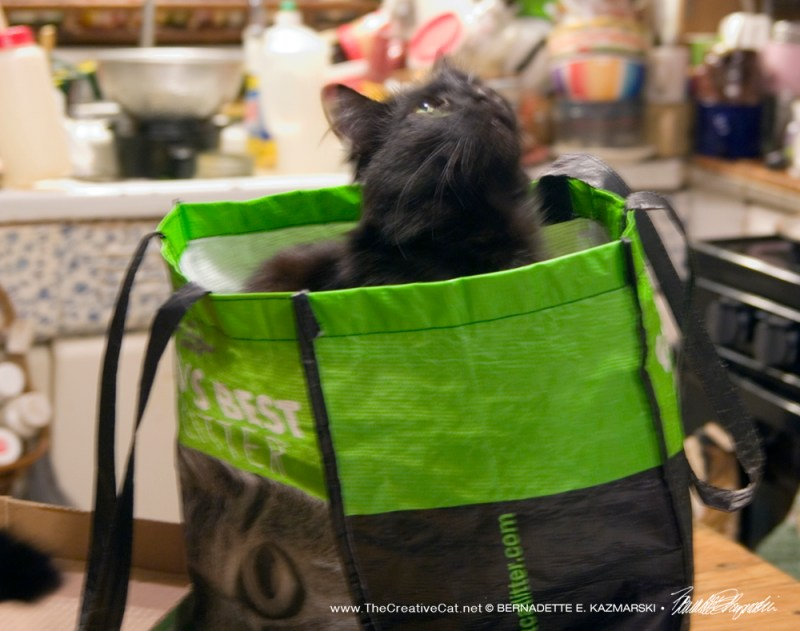The magic shopping bag makes everything special.