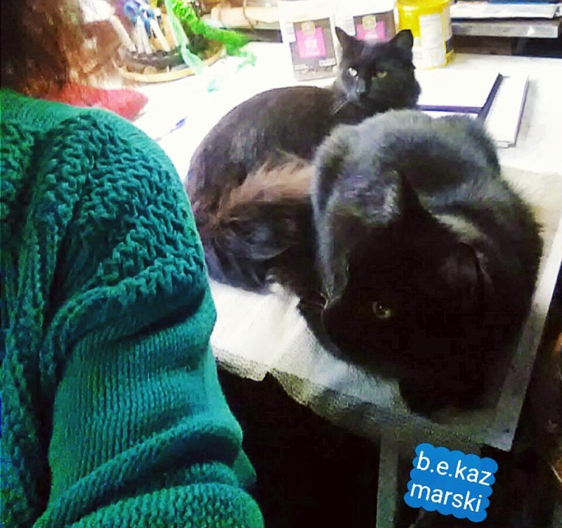 two black cats on table