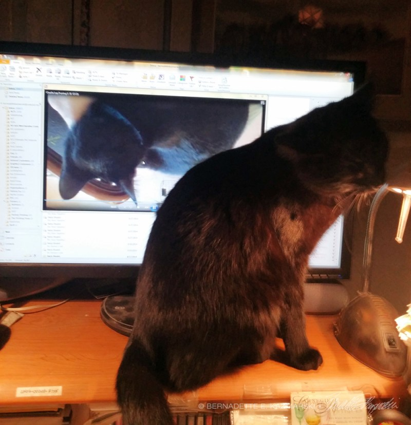 black cat by computer