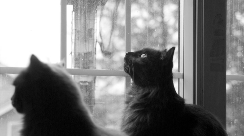 Waiting for birds.