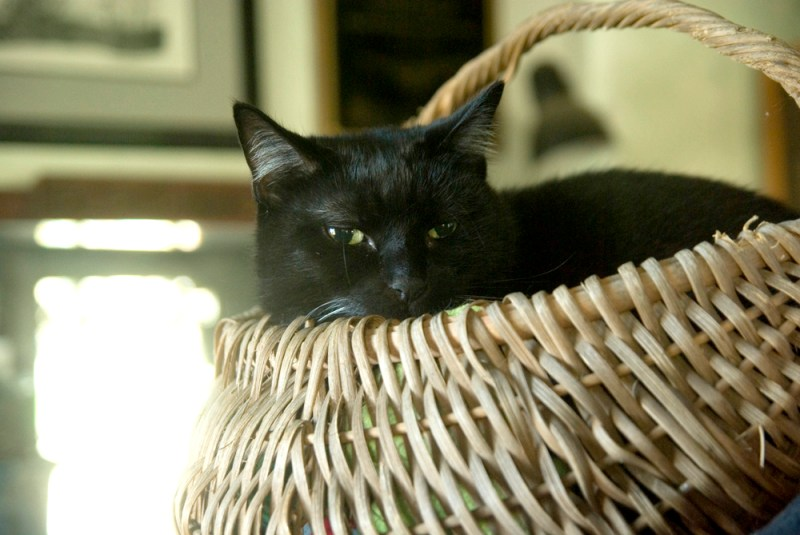 Bean in a Basket