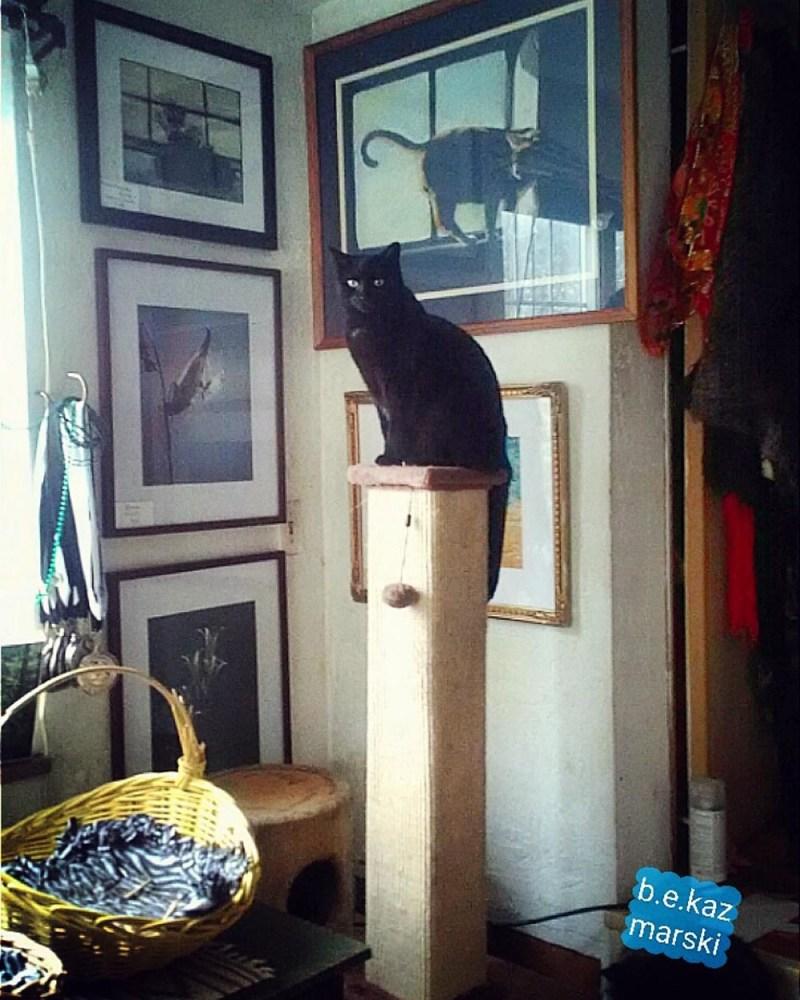 black cat on cat tree in gallery