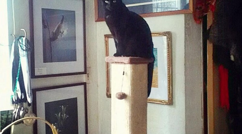 black cat on cat tree in gallery