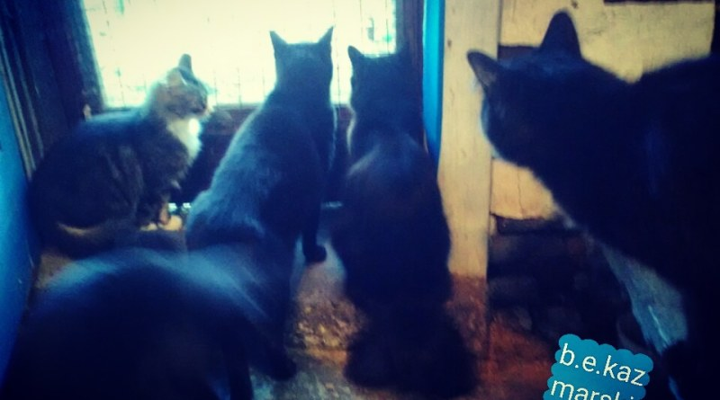 five cats at the door
