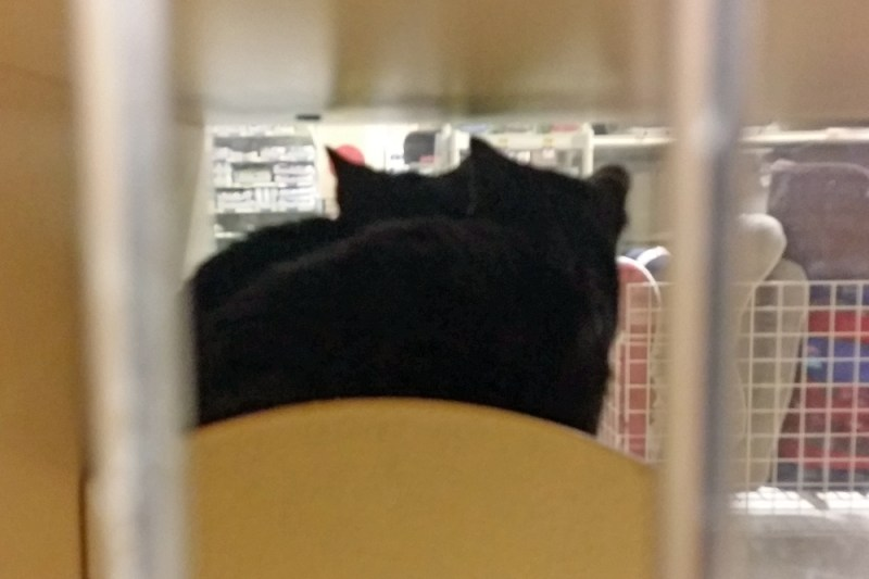 black cat in cage