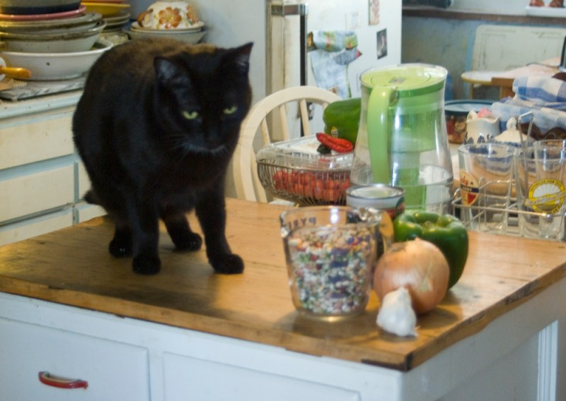 black cat with bean soup mix