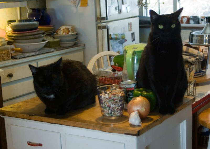 two black cats with bean soup mix