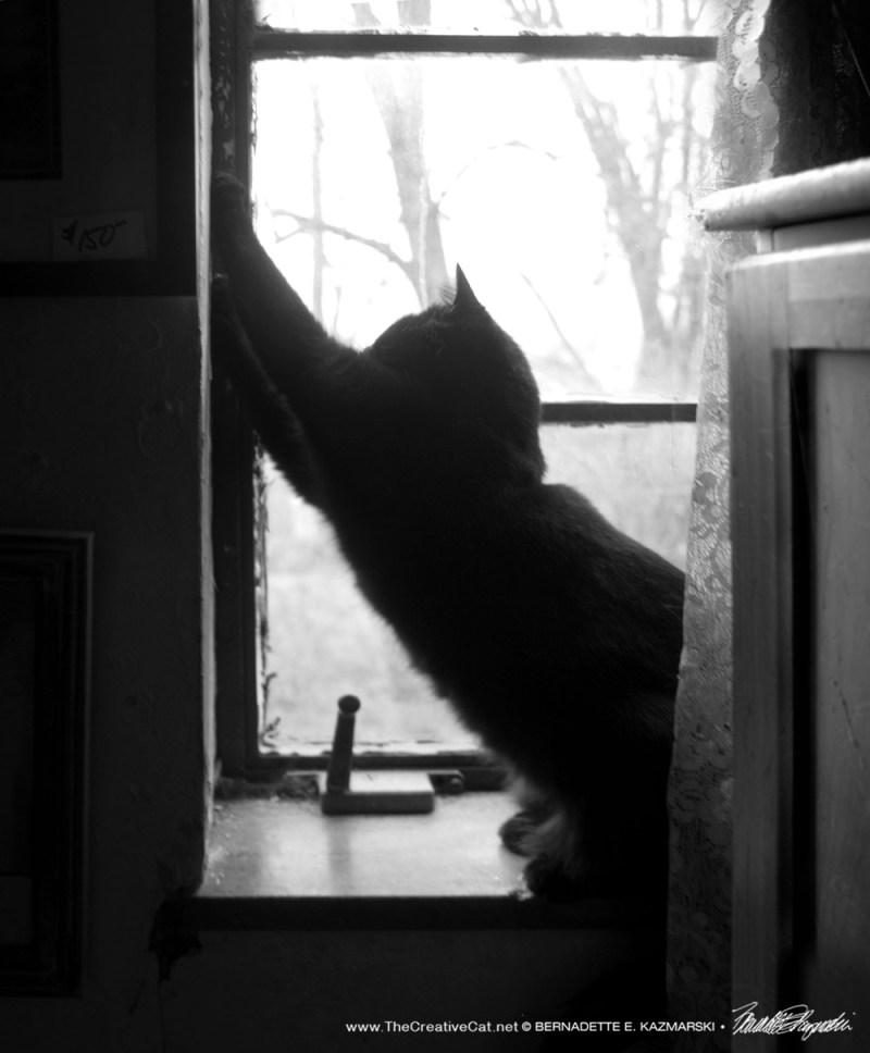 Bella does an interesting upward cat.