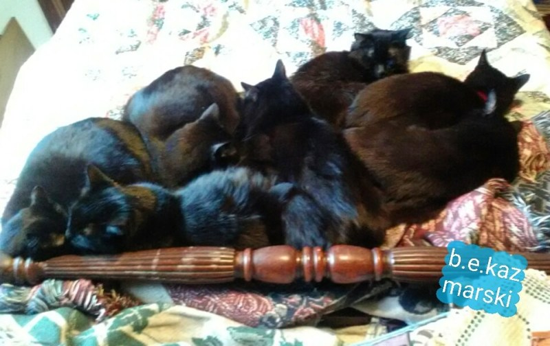 7 cats sleeping on bed