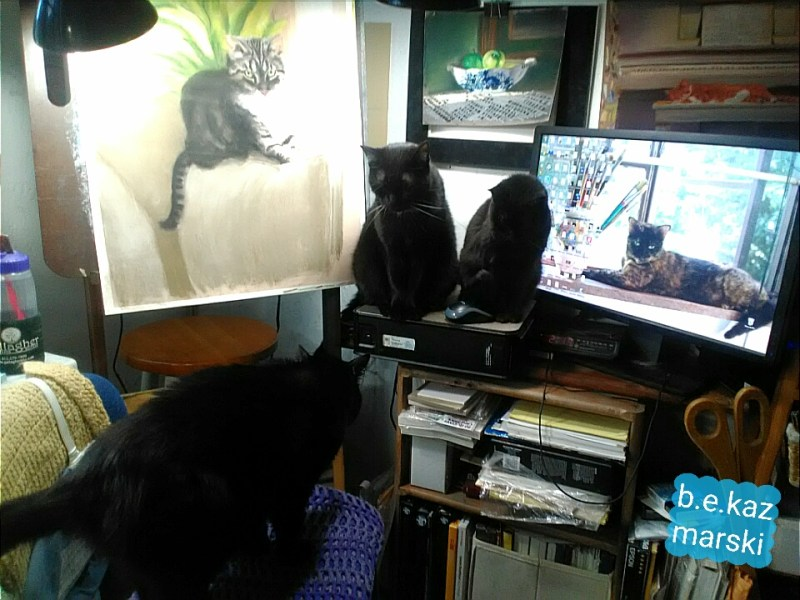 cats in studio