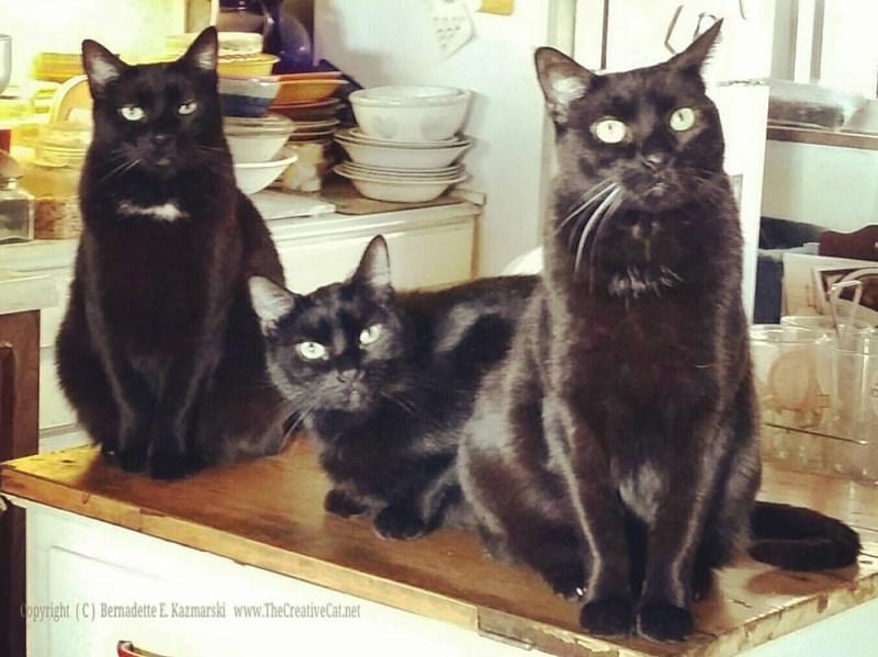 """My three sons."""