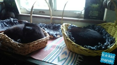 two black cats in baskets