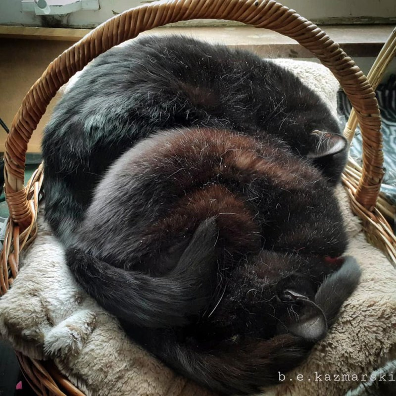 two black cats sleeping in basket