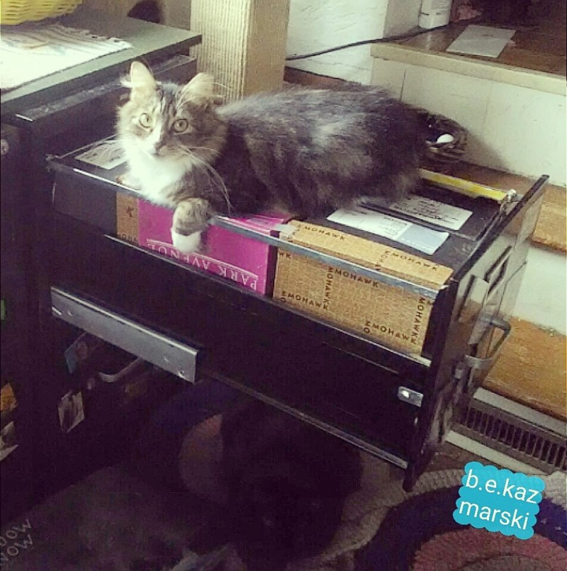 cats on and under file drawer