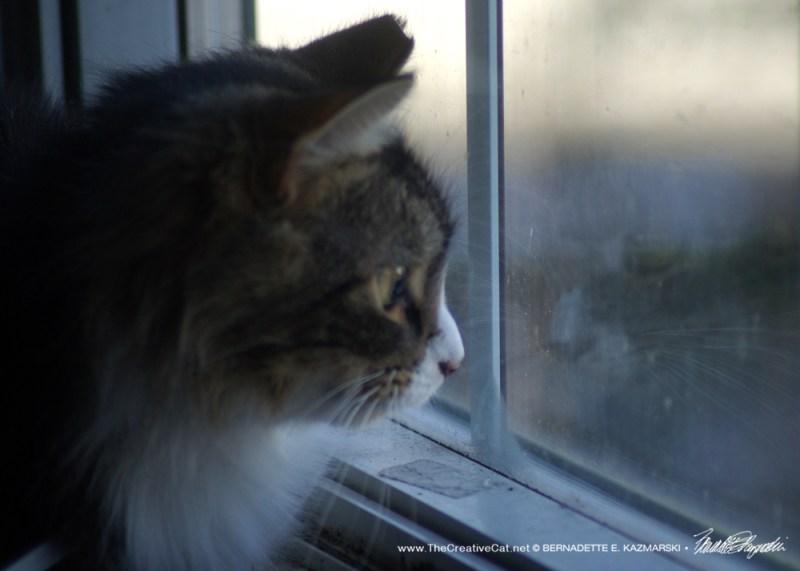 Mariposa Reflecting