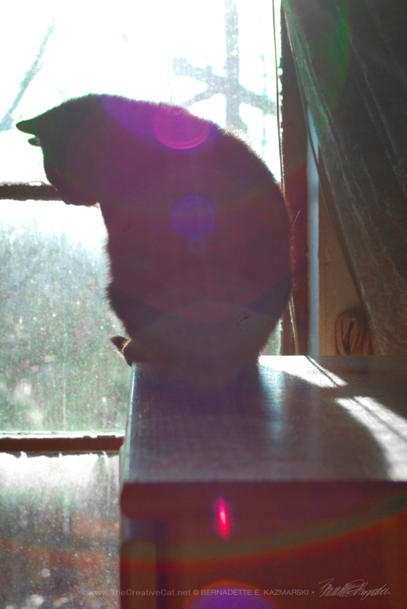 cat silhouette with sun flares