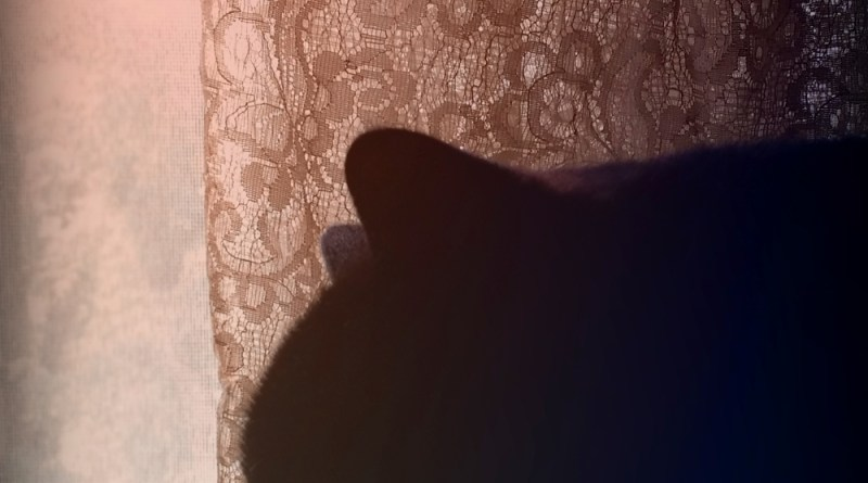 black cat in silhouette