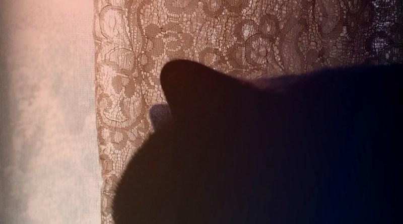 black cat in silhouette