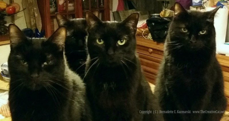 The Four Housecats of the Apocalypse