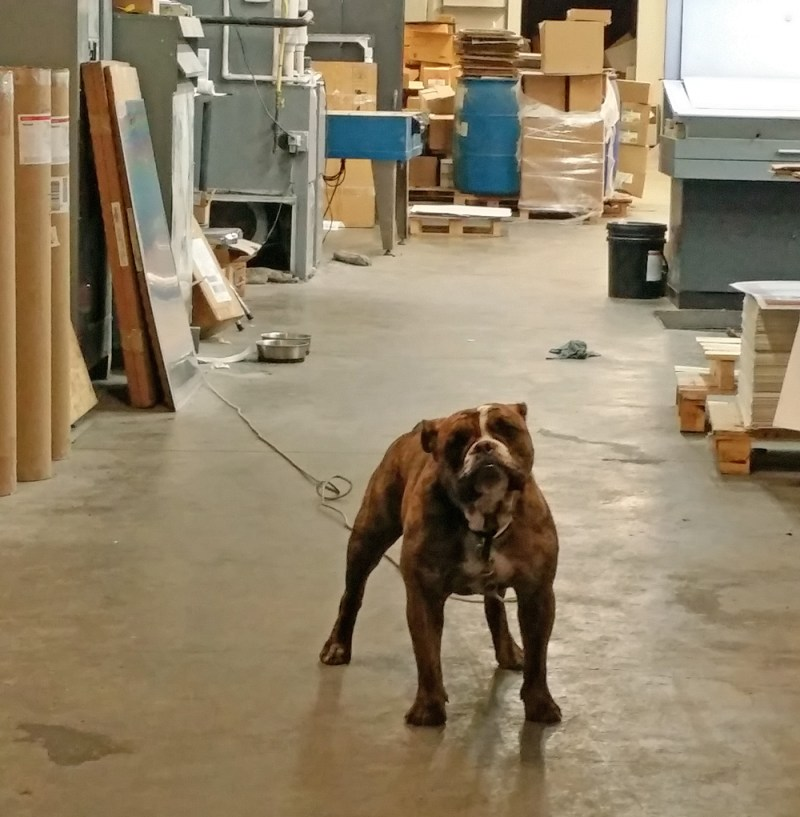 dog in warehouse