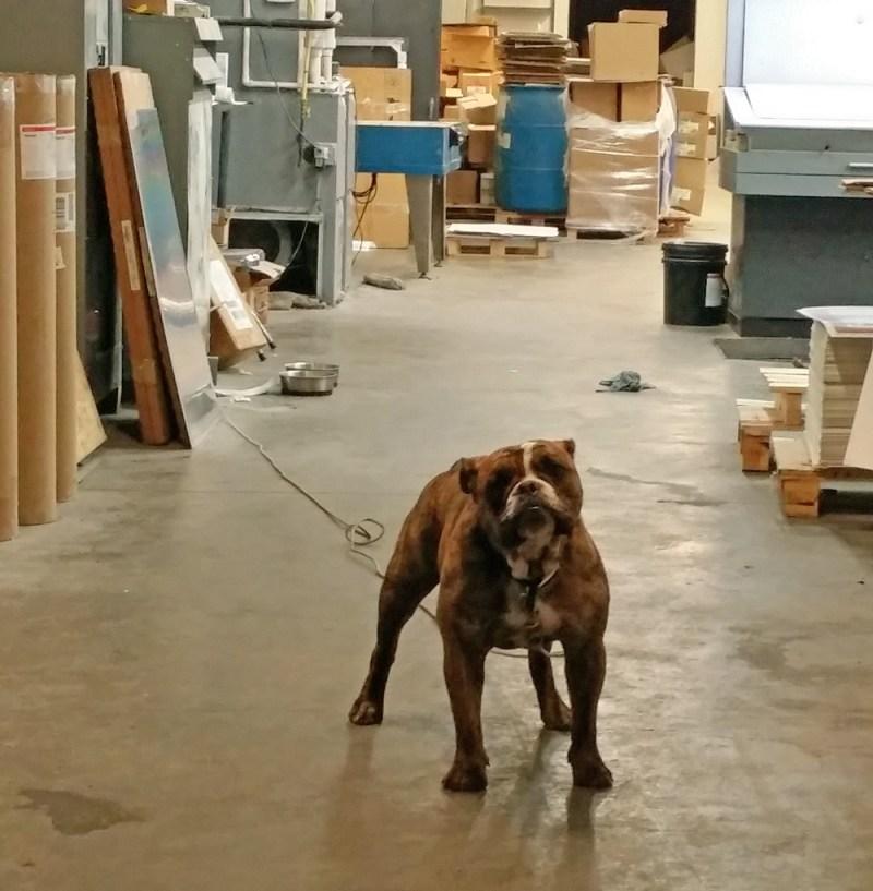 dog in warehouse