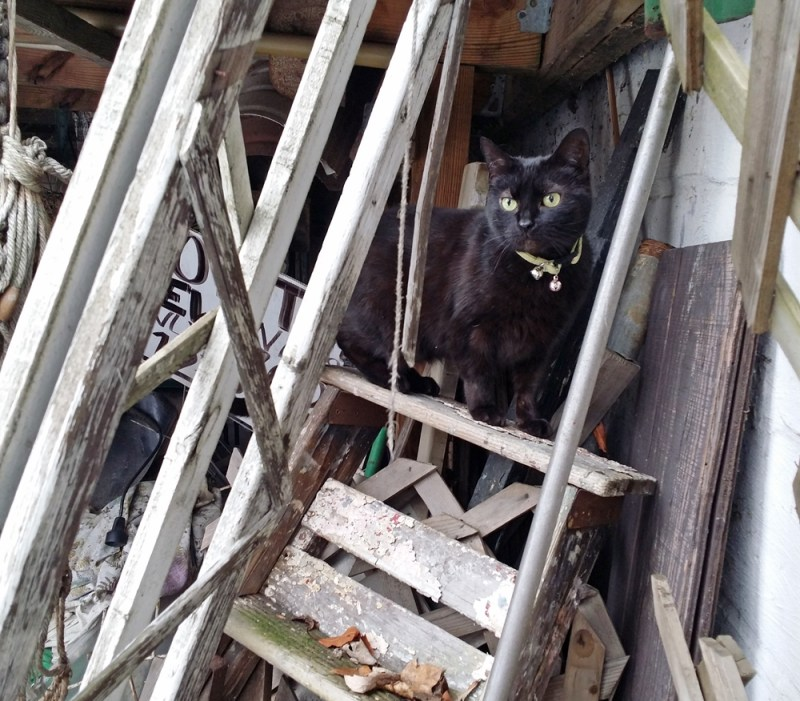 black cat on ladder