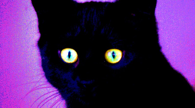 Bella in blues and purples black cat
