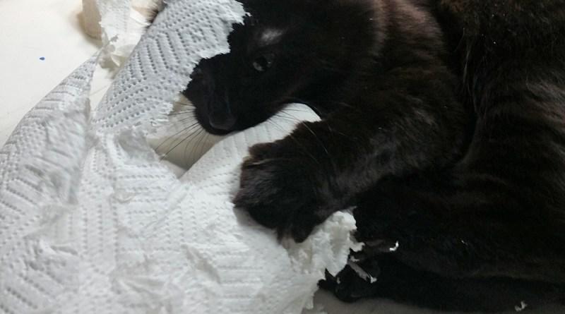 Smokie sculpts his paper towels.