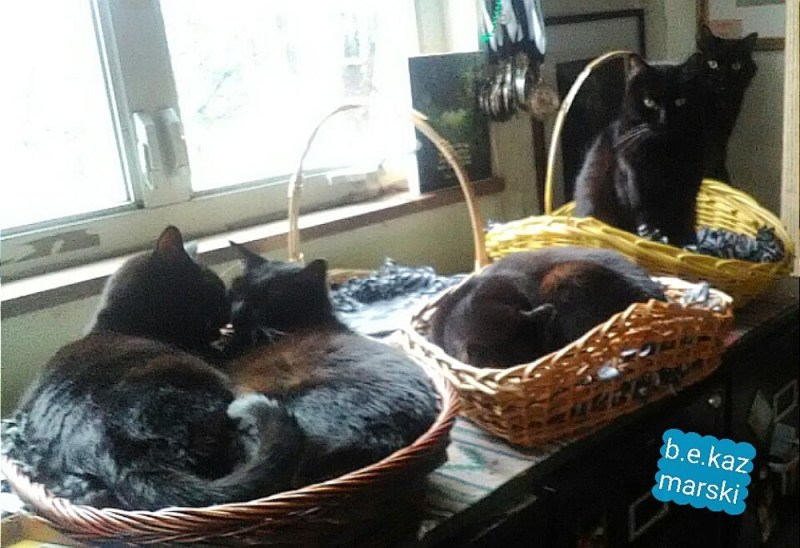 five black cats in baskets