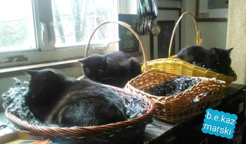 three black cats in baskets