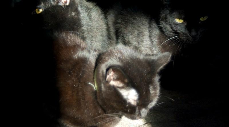Three black cats sharing one sun beam.