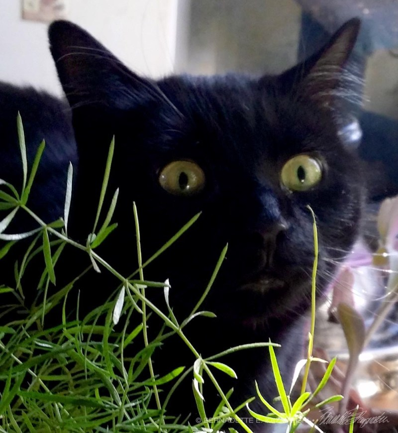 black cat with asparagus fern