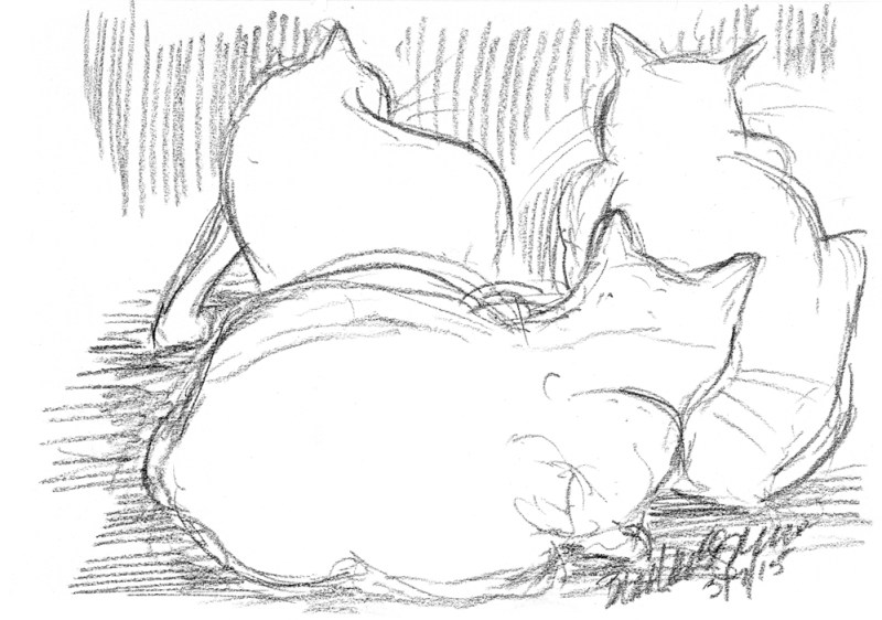 """Chillin"", charcoal pencil, 10"" x 7"" © Bernadette E. Kazmarski charcoal pencil sketch of three cats"